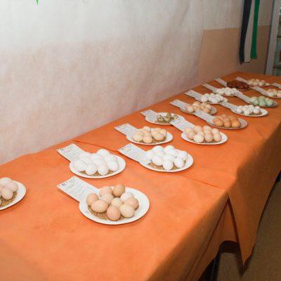 16 Eiersätze wurden bewertet
